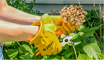 Rent Stihl Hand Tools Sales